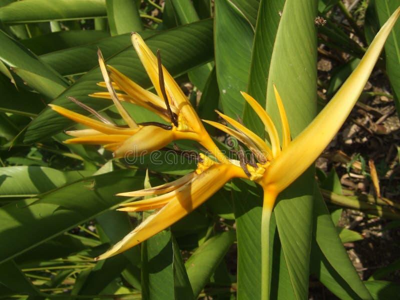Download Bird of paradise stock image. Image of strelitzia, symbolic - 22481445