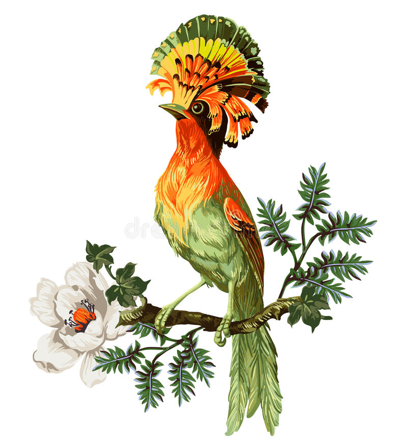 Bird of Paradise and exotic flowers vector illustration