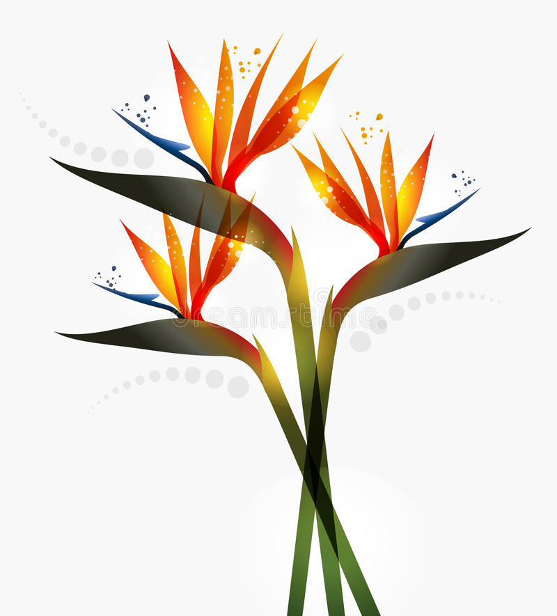Bird of Paradise flower. Over white background. EPS10 file version. This illustration contains transparencies and is layered for easy manipulation and custom
