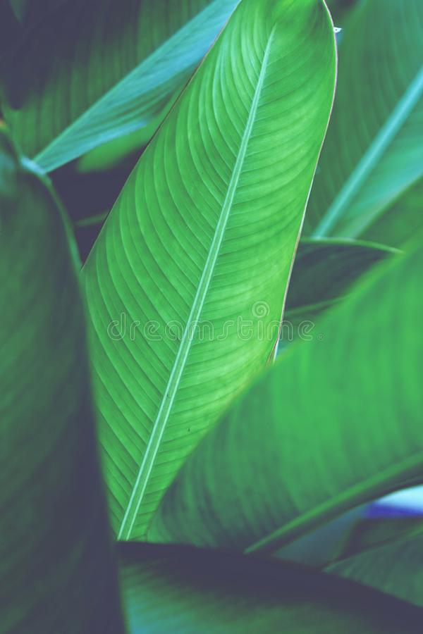 Bird of paradise, heliconia, leaf texture pattern background, spa background concept, copy space stock photography