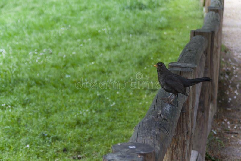 Bird in the park stock photo