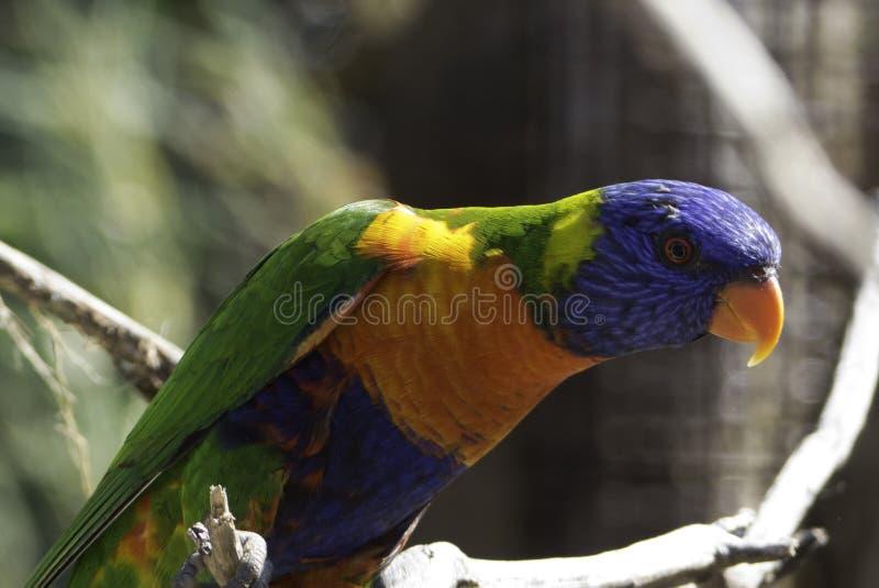 Bird, Parrot, Beak, Fauna stock images