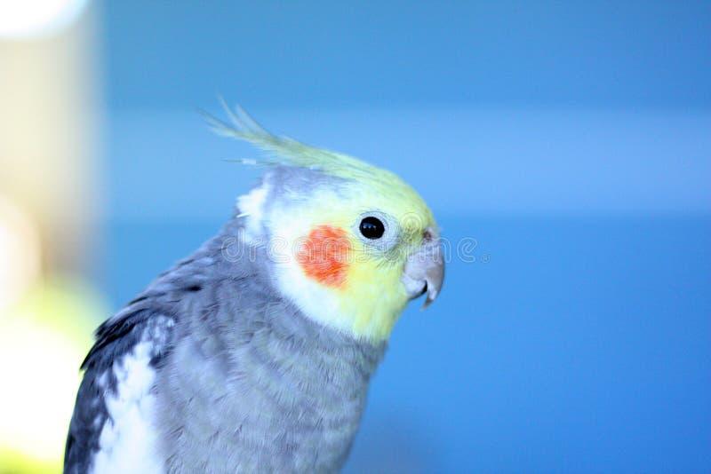 Bird, Parrot, Beak, Parakeet stock images