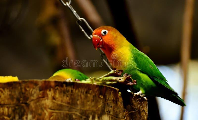 Bird, Parrot, Beak, Parakeet stock photo