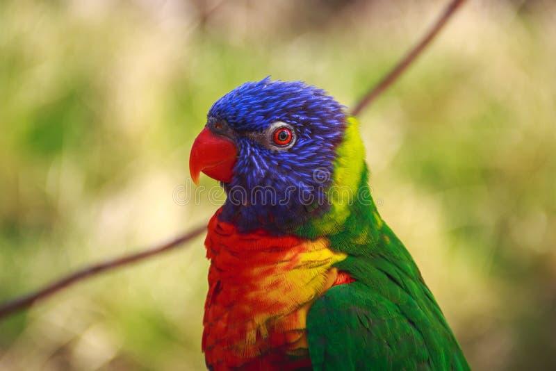 Bird Parrot Colors Free Public Domain Cc0 Image