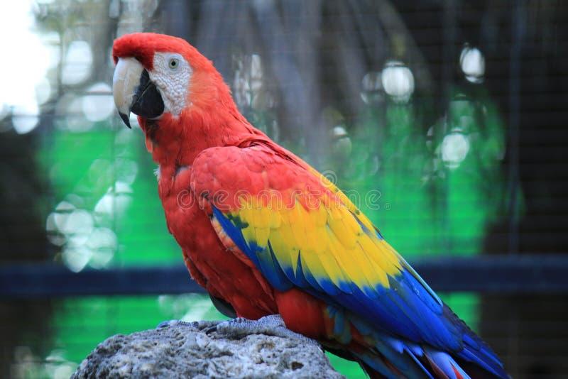 Bird, Parrot, Macaw, Beak royalty free stock photos