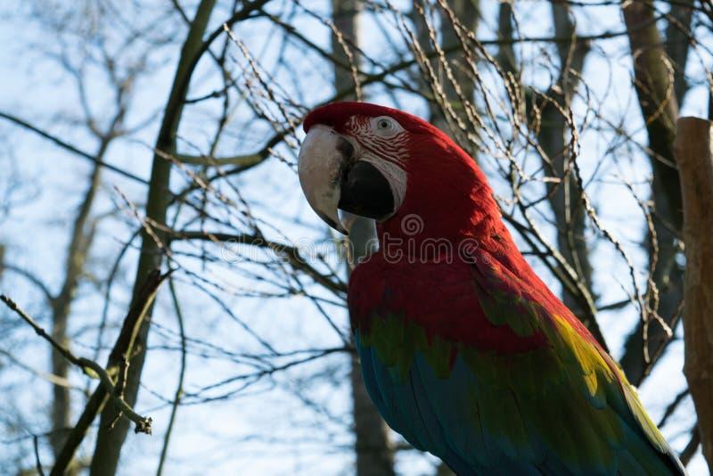 Bird, Parrot, Macaw, Beak stock photo