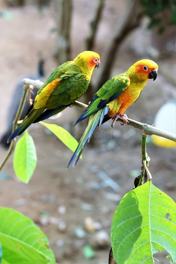 Bird, Parrot, Parakeet, Beak stock photo
