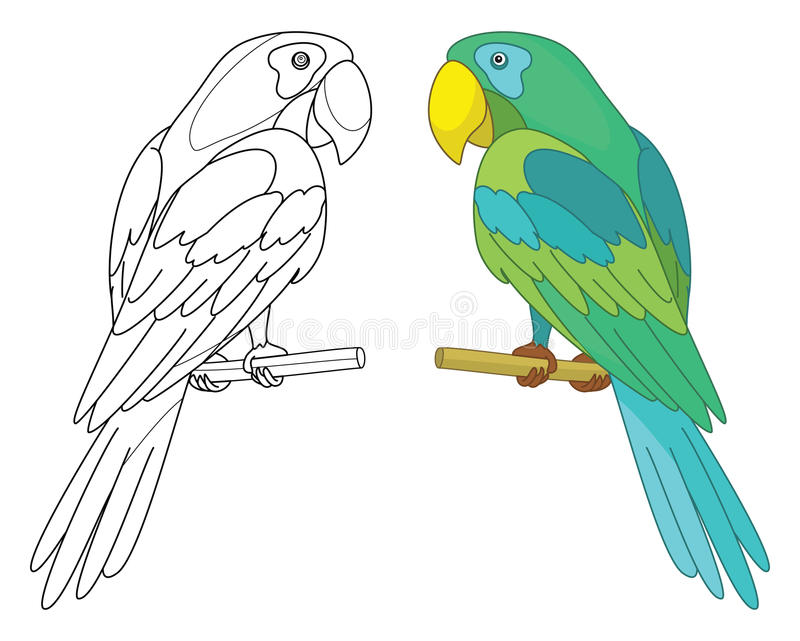 Bird parrot on a perch. Bird parrot sits on a wooden perch, colored and black contour on white background royalty free illustration