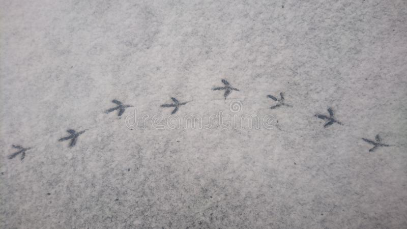 Bird path stock photos