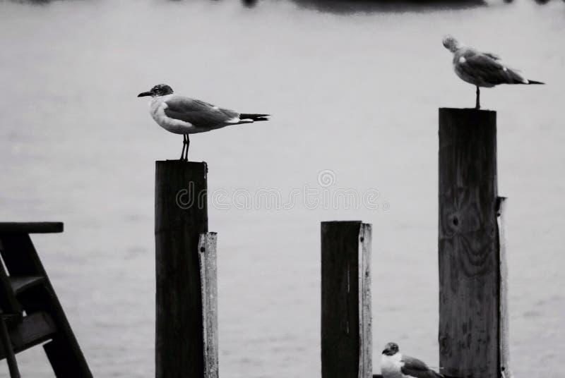 Bird on a perch stock photos