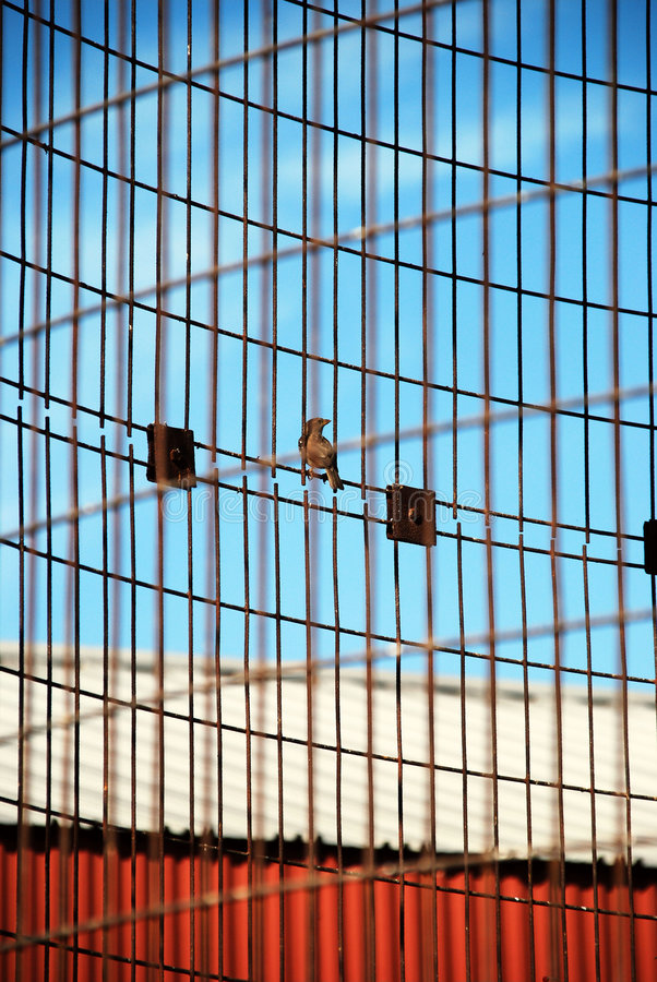 Download Bird perched on corn crib stock image. Image of empty - 6274773