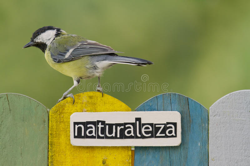 Bird perched on a fence decorated with the word nature on spanish royalty free stock photo