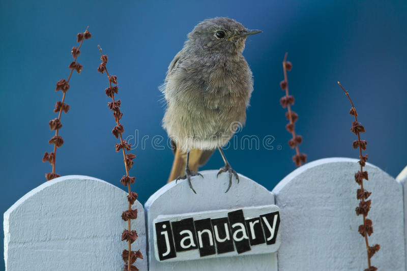 Download Bird Perched On A January Decorated Fence Stock Photo - Image: 33665430