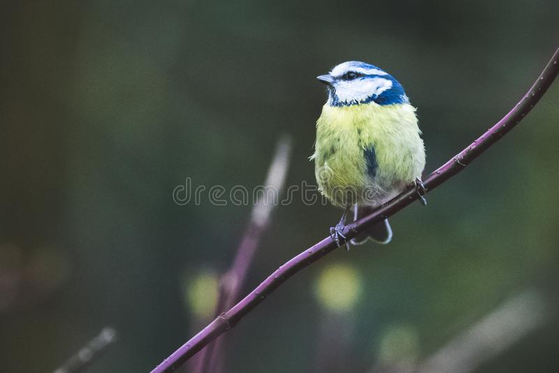 Bird Perched on Plant royalty free stock image