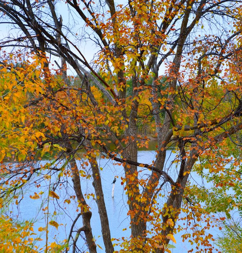 Download Bird Perched On Post In Boise Cascade Lake Stock Photo - Image of foliage, post: 103619410