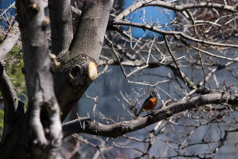 A bird perched on a tree after the break of winter stock photo