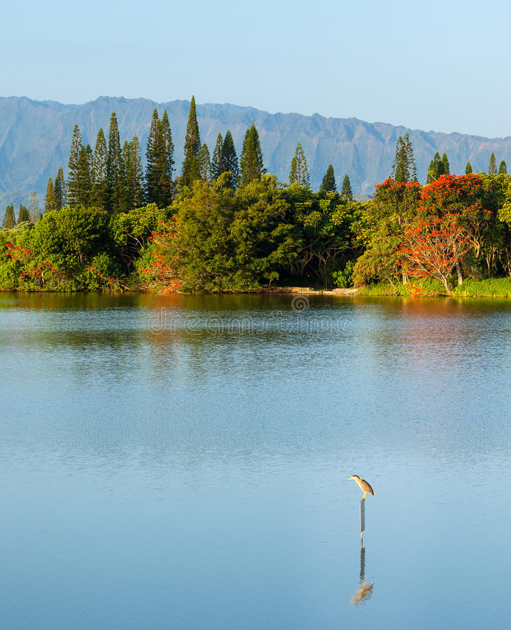Bird Perching On Sign In Calm Lake By Na Pali Stock Photos