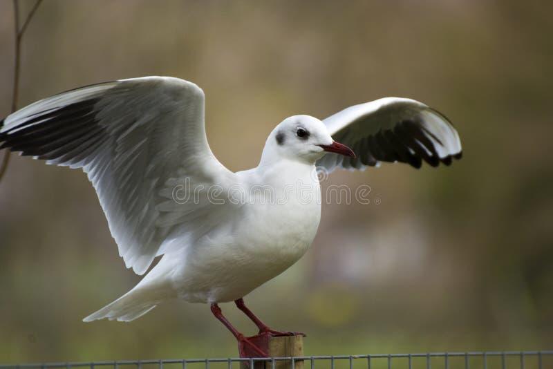 Bird 223. Photo of a bird with cold colours, selective focus and sunlight stock photos