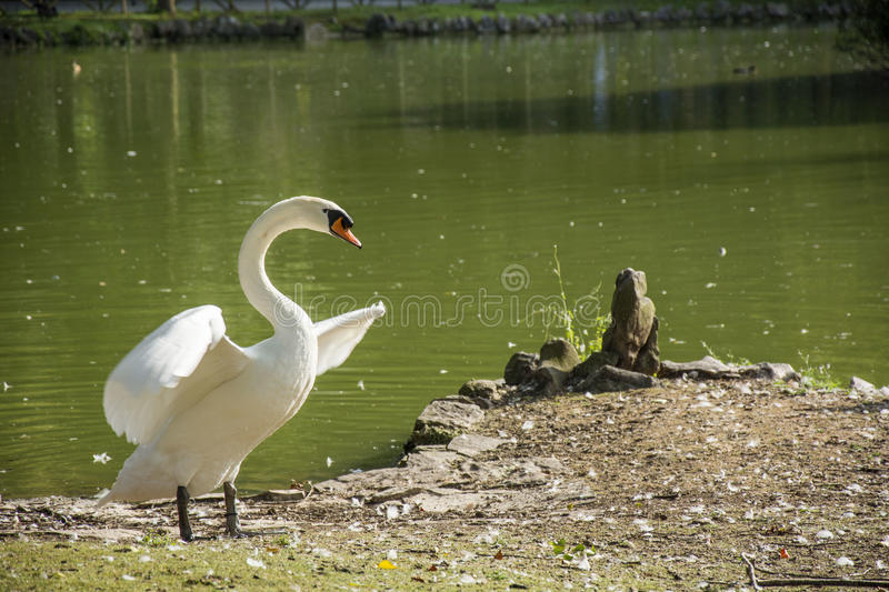 Bird 136. Photo of a bird with white feathers and sunlight stock photo