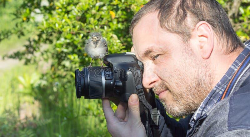 Bird and photographer stock images