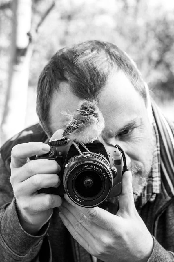 Bird and photographer stock photos