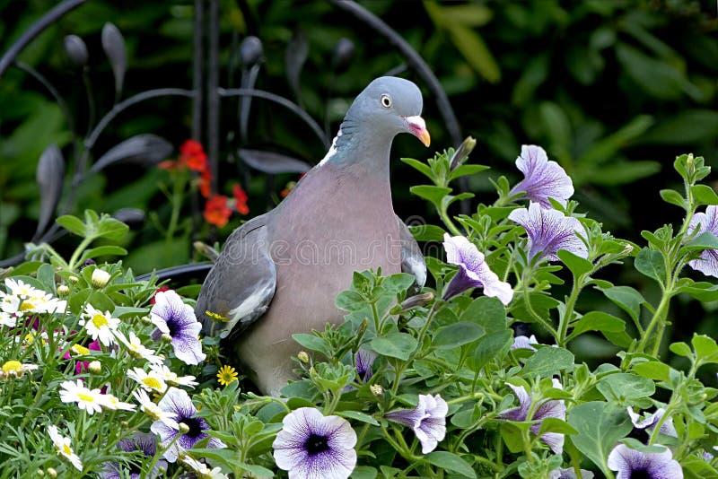 Bird, Plant, Flora, Fauna Free Public Domain Cc0 Image