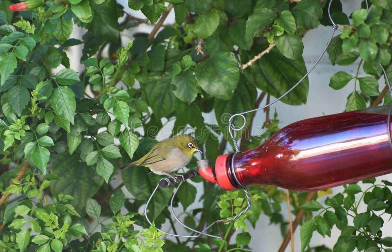 Bird, Plant, Tree stock image