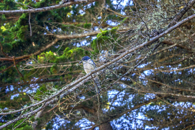 Bird in Point Lobos State Park royalty free stock photos