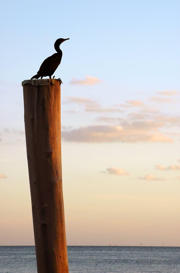 Bird on pole stock photography