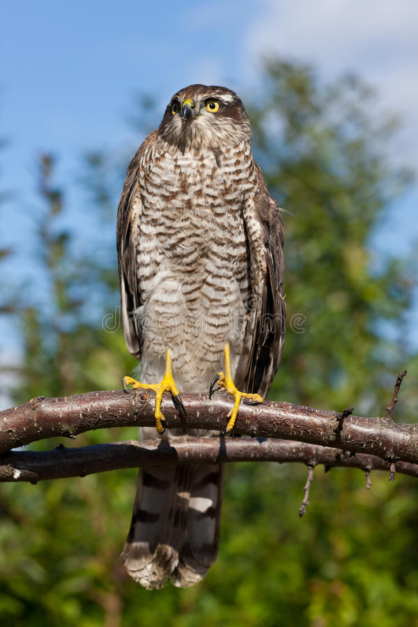 Download Bird portrait stock photo. Image of glance, hawk, beak - 16251536