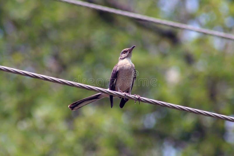 Bird on power line stock photo