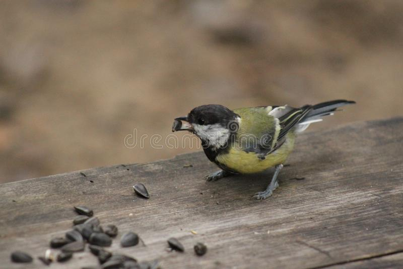 Bird. stock photography