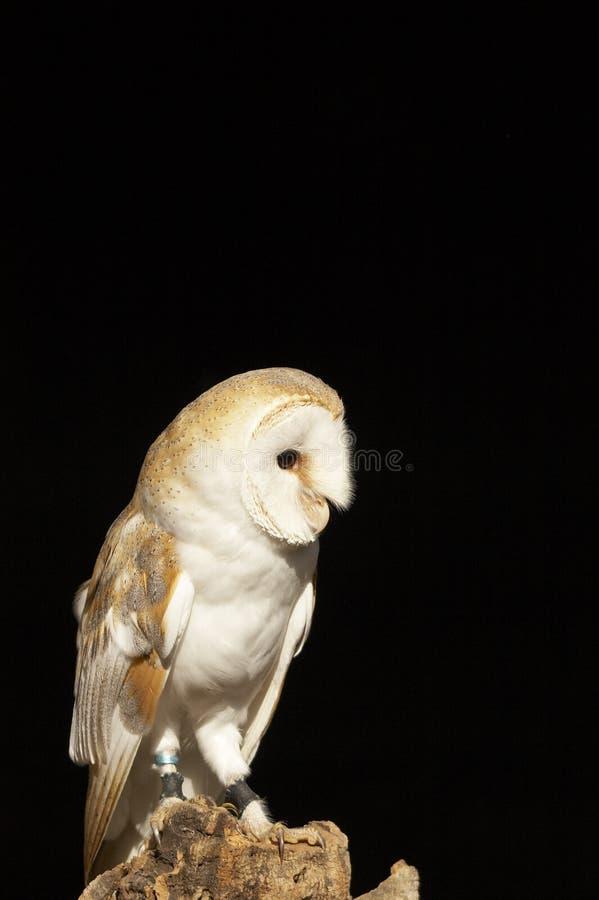 Bird of Prey stock photography