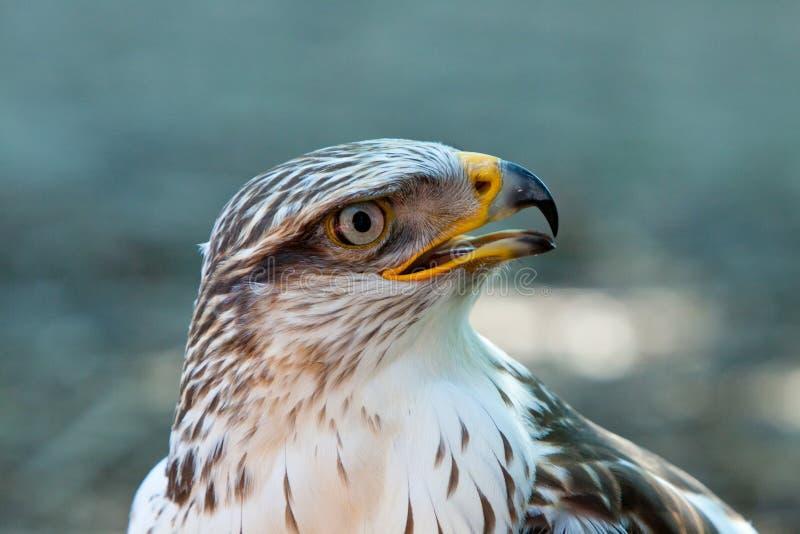 A Bird of prey stock images