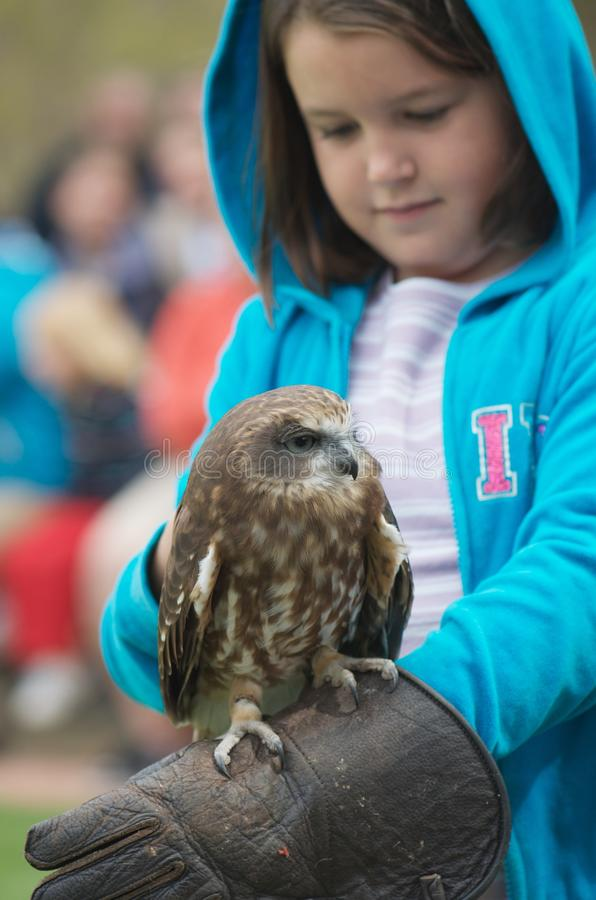Bird of prey and child. Child holding small bird of prey (Southern Boobook) during raptors show; focus on the bird royalty free stock photography