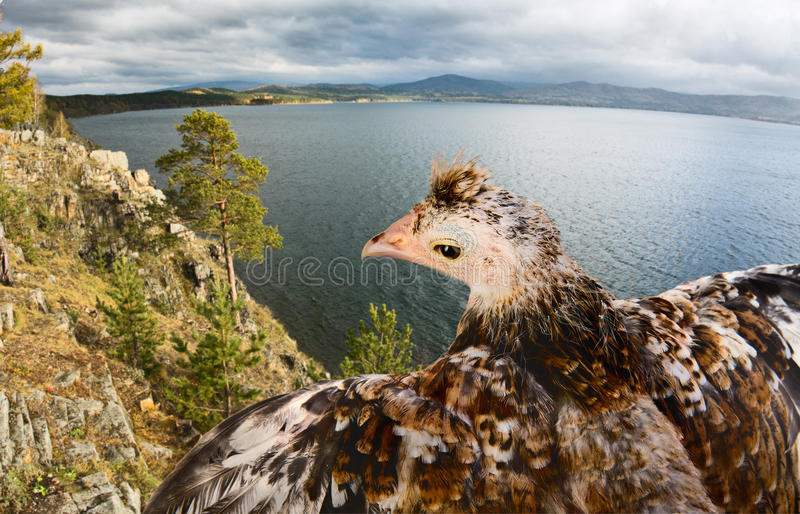 Download Bird stock photo. Image of horizontal, beak, flap, up - 35205580