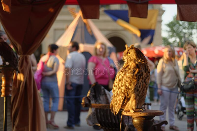 Bird of prey looking at the target. Bird of prey looking at the target, during the medieval fair in the Plaza de la Seo, during a hot summer afternoon royalty free stock image