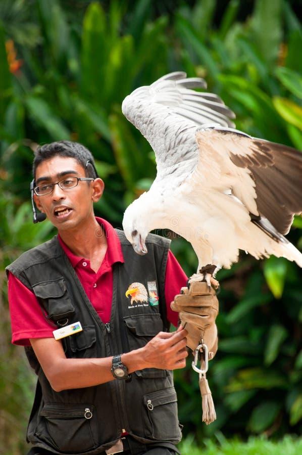 The Bird of Prey Show stock photos