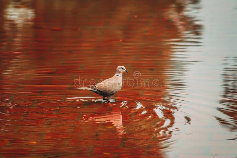 Bird after rain royalty free stock photo