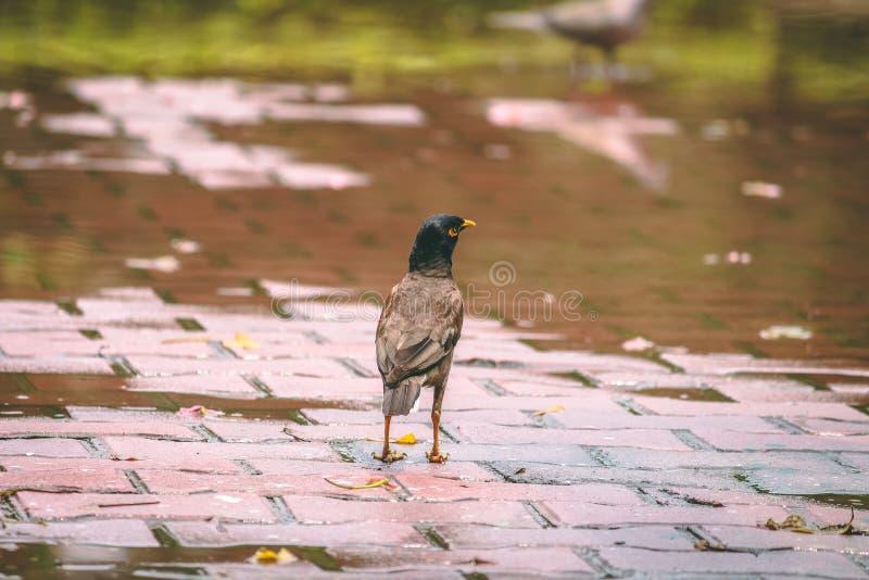 Bird after rain royalty free stock photos