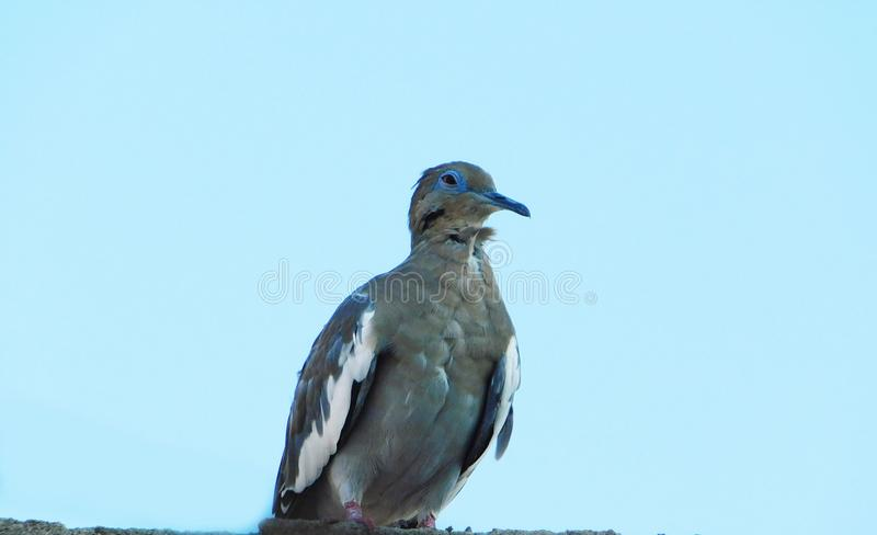 A common bird behind a huge blue sky stock image