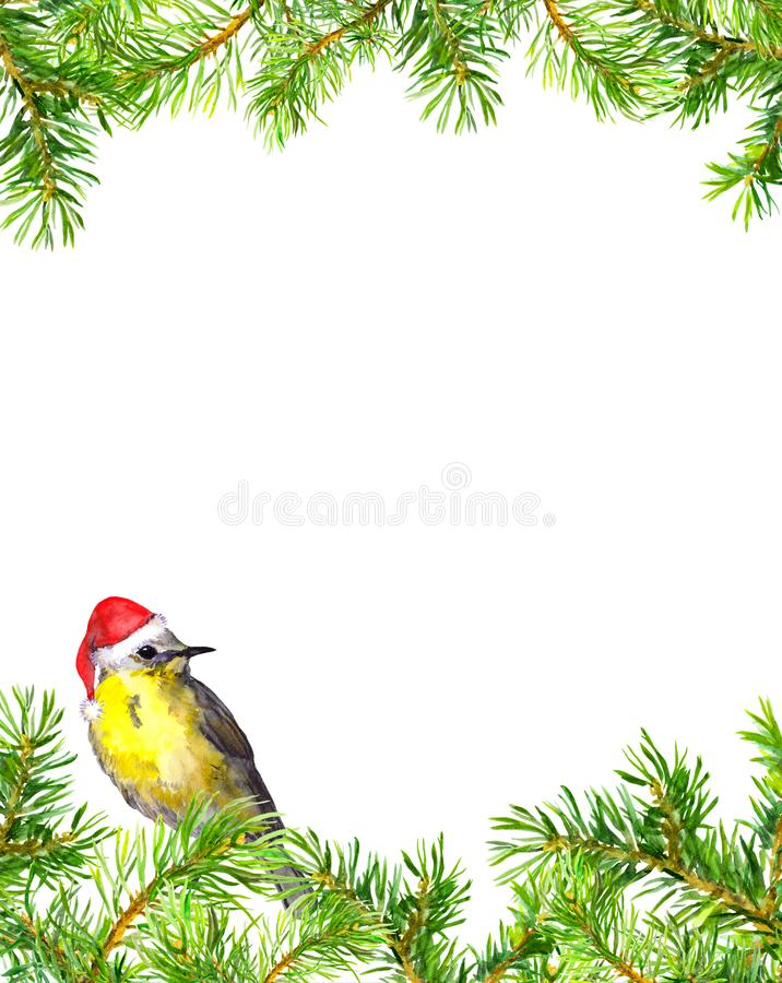Bird in red christmas hat, fir tree branches border. Christmas card. Watercolor stock illustration