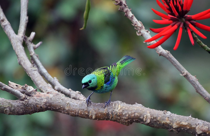 Bird and red flower royalty free stock photo