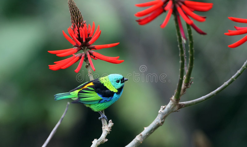 Download Bird and red flower stock photo. Image of tree, wings - 4234478