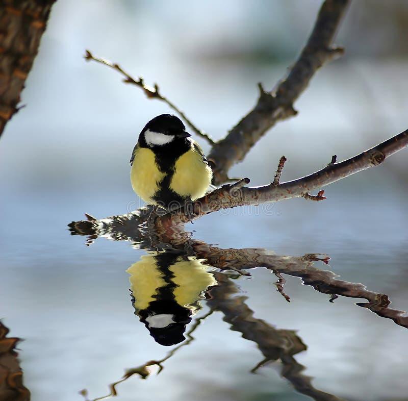 Bird reflection royalty free stock photo