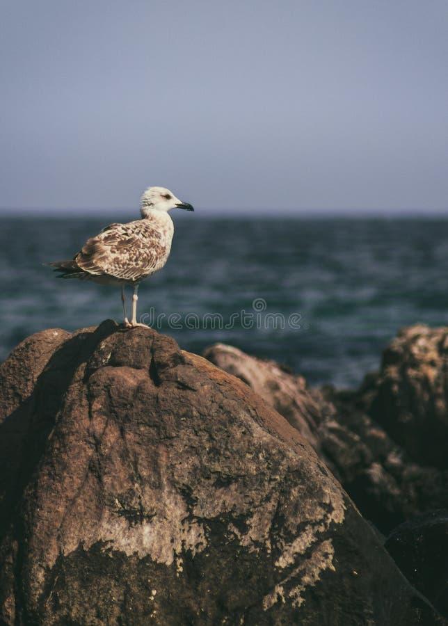 Bird relax on Black sea royalty free stock photo