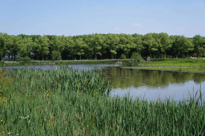 Bird reserve area in the Netherlands. A bird reserve area near the Delftse Hout recreational area in the south of Holland stock photography