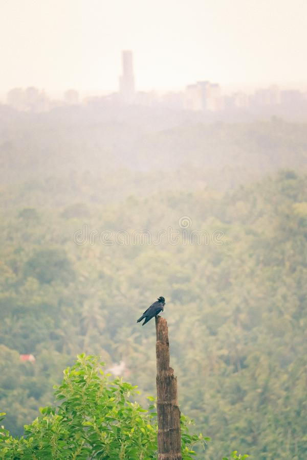 Bird resting in a wooden post. Black bird resting on a wooden post in a forest in the middle of green royalty free stock images