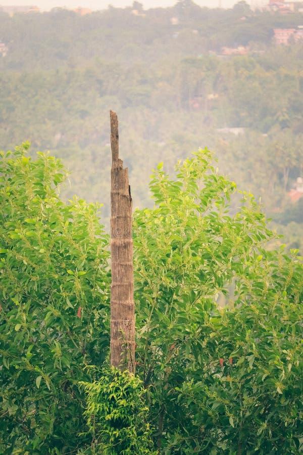 Bird resting in a wooden post. Black bird resting on a wooden post in a forest in the middle of green stock photo